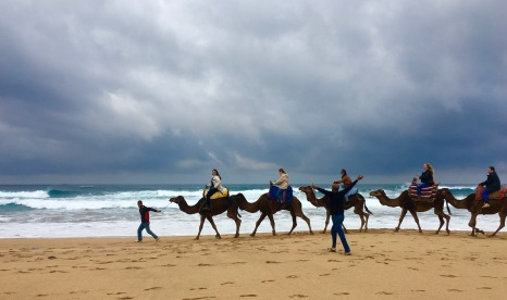 camellos en la playa